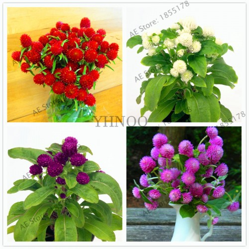 60Pcs/Bag Gomphrena Globosa Plantas Original Package Garden Bonsai Flower Plants Easy to Grow Globe Amaranth Flower