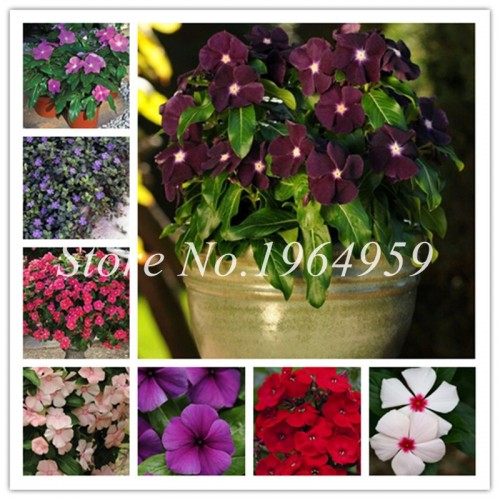 90pcs/Bag Vinca Rosea Tall Mix Periwinkle Bonsai Flower Cover Behind House Garden Blooming Flower Bonsai
