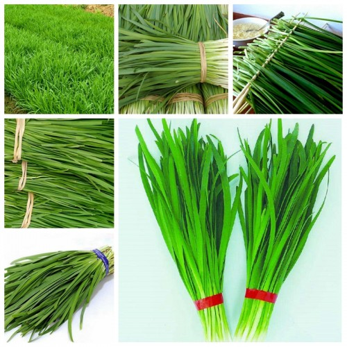 100 pcs/ bag Chinese Chives Everygreen Tasty Juicy Leek Vegetable Garden Plant  Flower Pot Planters Easy to Grow