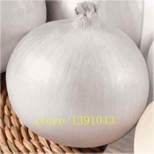 100pcs/bag white onion,giant onion seeds,planting onion seeds,Organic Heirloom vegetable fruit seeds rare plants for home garden