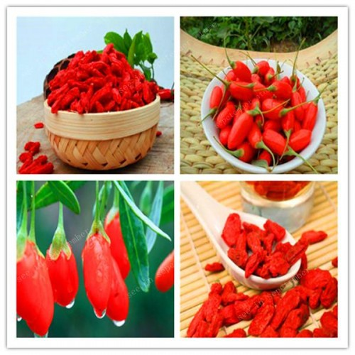50 Pcs Red Goji Berry Outdoor Wolfberry Organic Heirloom Fruit For Garden Lycium Chinese Plant