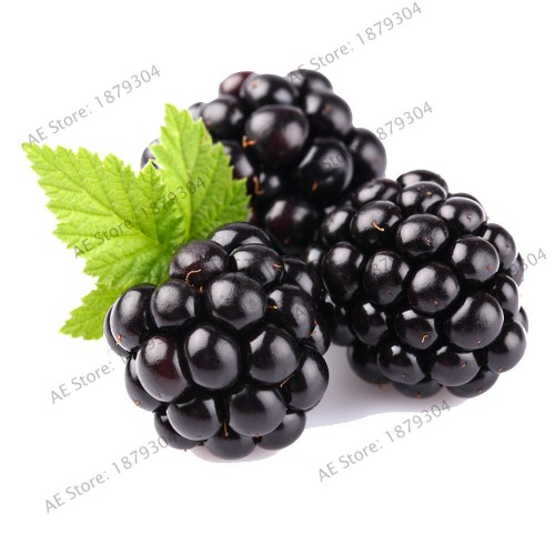50 Seeds Heirloom  Blackberry Bonsai Sweet Black Berry Giant Blackberries