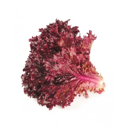 100 Pieces Red Fire Lettuce Seeds Good Taste Romaine Delicious Salad Choice Home Vegetable Plant