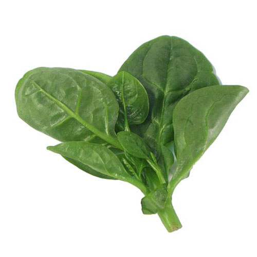 200 Treated Indian Big Leaves Spinach Hybrid Seeds