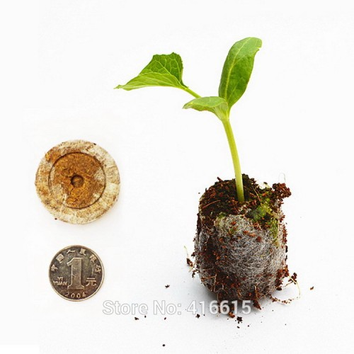 Count Jiffy Peat Pellets Seed Starting Plugs Seeds Starter Pallet Substance Medium Seedling