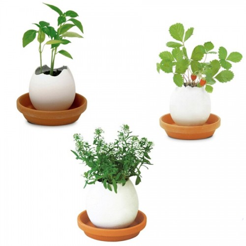 Planting Potted Mini Green Lucky Potted Plants Cultivated Desktop Micro Landscape