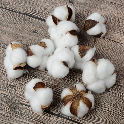 10Pcs Natural Cotton Balls Dry Flower Wedding Dried Flowers Plants Party Birthday Hotel Courtyard Decoration Flowers