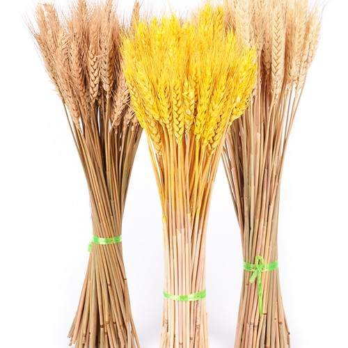 50Pcs lot Real Wheat Ear Flower Natural Dried Flowers for Wedding Party Decoration DIY Craft Scrapbook
