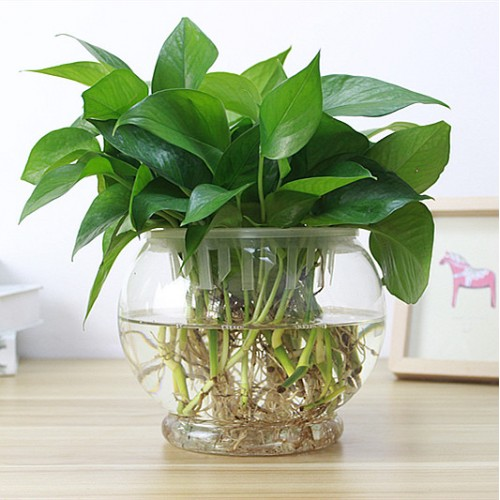 Popular 1PC High Borosilicate Glass Hanging Glass Flower Planter Vase Terrarium Container Home Garden Ball Decor.