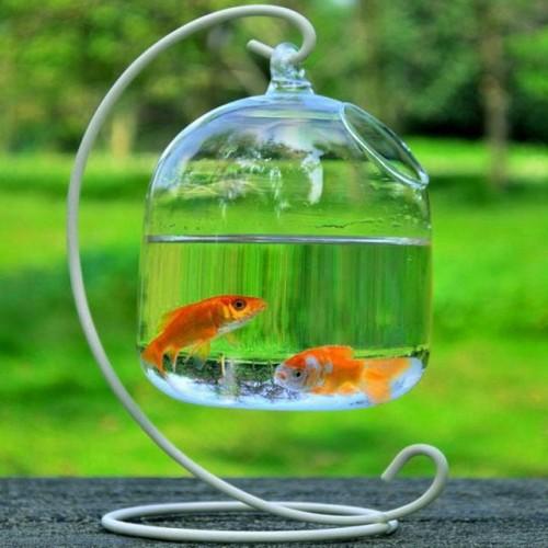 SOLEDI Transparent Hanging Glass Vase Container Terrarium Plant Flower Pot Vase Decoration Home Decor without iron.