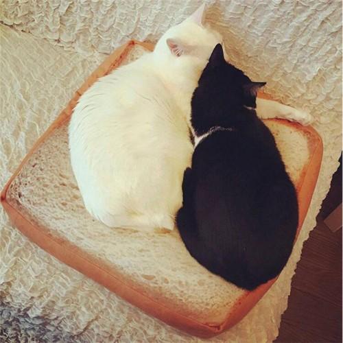 Creative Bread Toast Cat Lounger Bed Kennel Mat Soft Fiber Pet Dog Puppy Warm Soft Bed