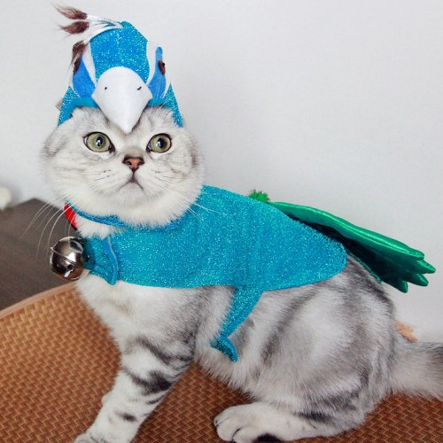 Blue Peacock cat clothes pet clothes
