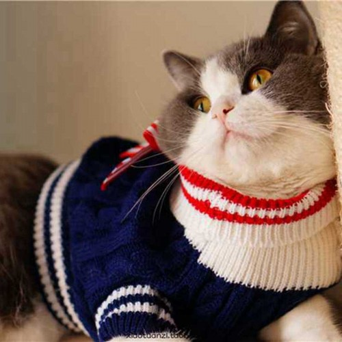 British College Series Pet Cat Bowknot Sweater