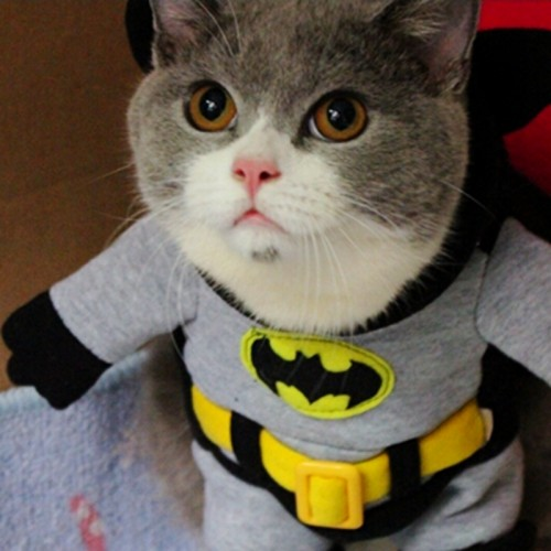 Cat Costume Funny Batman Costume Pet Clothing