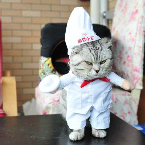 Chef Style Pet cat Clothes Cat Costume Supply