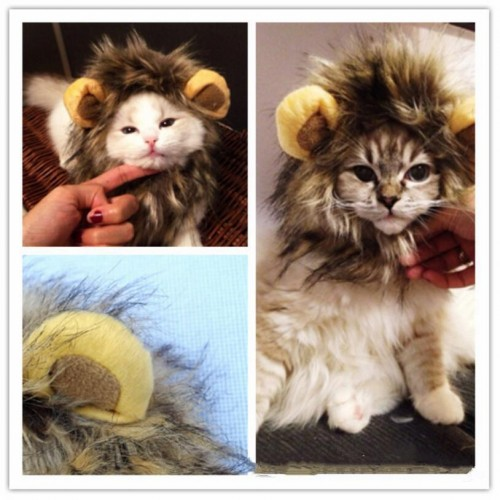 Funny Lion Mane Cat Hat head cat toy lion mane hat