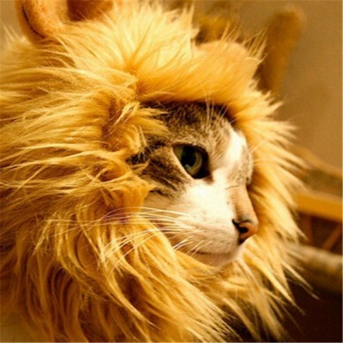 Hat costume cats wigs Cool Pets Lion hat Wigs Mane Hair costume Festival Party Fancy
