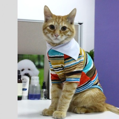 Pet Cat Clothes cat Vest Spring summer shirt Pet Shirt VIP Costume pajamas