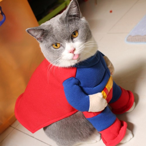 Pet Clothes Muscular Superman Cat Costume