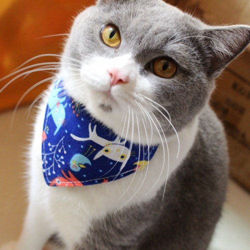 Cat Collar Khoushui tsin Design Catwear