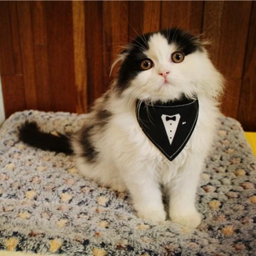 Handmade Pet Cat Gentleman Tie Knot Triangular scarf