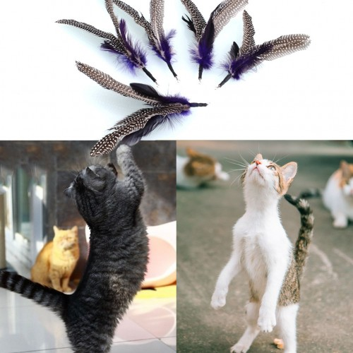 Pet Bird feather Wand Cat Kitten Interactive Toys Refill Home Drop