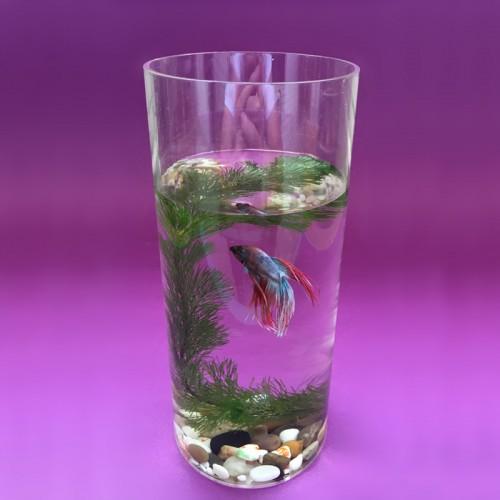 Clear transparent plastic aquarium fish breeding box for Mini fish bowls