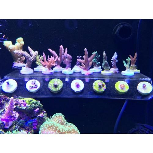plus coral frag stand bracket mini nano strong magnet fix aquarium fish reef tank