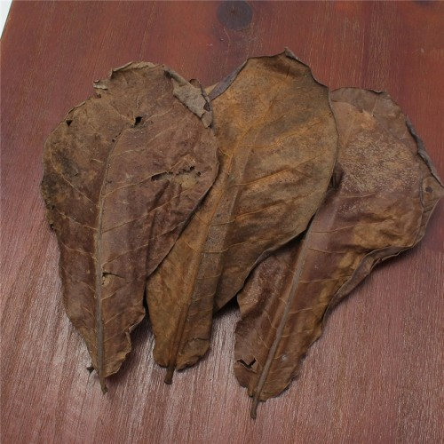 Grade A Natural Terminalia Catappa Foetida Leaves Island Almond Leaf Fish Cleaning Treatment Aquarium Tank