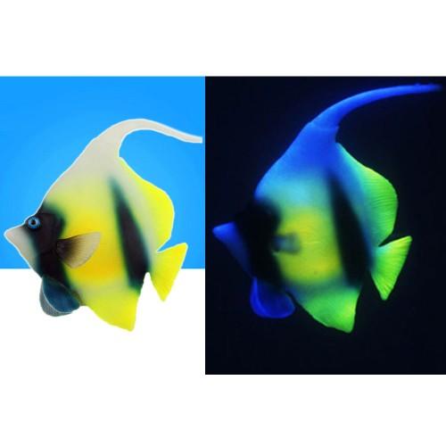 Fish tank decorative super cute simulation of tropical Night Light fish aquarium luminous ornamental
