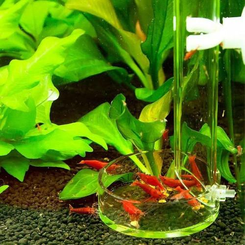 Red bee shrimp feeder long tube bottom fish arcylic aquarium fish marine coral reef tank