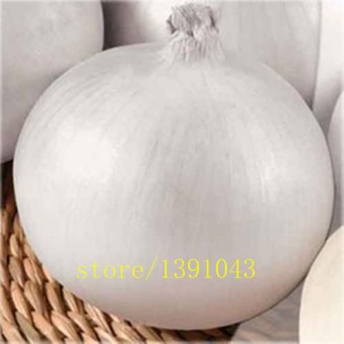 100pcs/bag white onion,giant onion seeds,planting onion seeds,Organic Heirloom vegetable fruit seeds rare plants for home garden