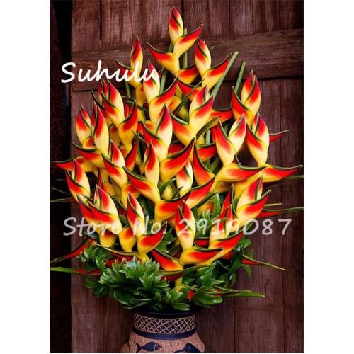20 Pcs Rare Aloe Seeds Succulent Plants Indoor Plant Bonsai Tree Seeds Lucky Aloe Seeds Diy Home Garden Plants Purify The Air