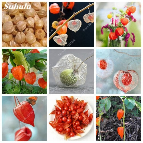 20 pcs/ bag Sweet Tasty Physalis Juicy Fruit Golden Berry Bonsai Chinese Latern Garden Plant Gooseberry