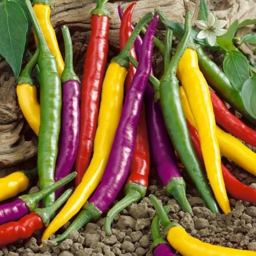 20 pcs/ bag Multicolored Pepper Balcony Ornamental Super Chili Vegetable Plant Mini Garden Decor