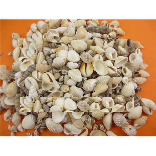 80pcs Beach Seashells Sea Shells for craft Decor