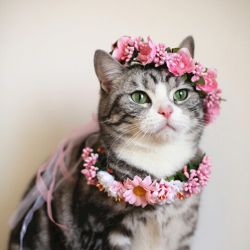 Flowery Head Band for Cats Pet Wedding Collars Cat Collars