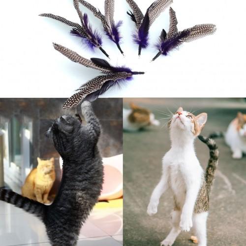 Pet Bird feather Wand Cat Kitten Interactive Toys Refill Home Drop